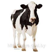 Ректальное исследование на стельность и гинекологическое обследование коров фото
