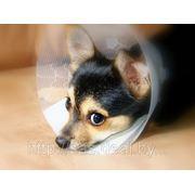 Кесарево сечение у собак, кошек фото