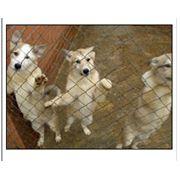 Разведение собак элитных пород охотничьих: западно-сибирские лайки, среднеазиатские и немецкие овчарки фото