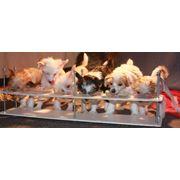 Изготовление регулируемых столовых для щенков фото