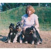 Питомники собак фото