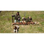 Охота на фазана фото