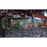 Монтаж аквариумных витрин фото