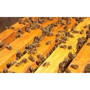 Пчелопакеты, пчелы из Львовской области фото