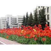 """Ролик """"Я люблю свою страну"""" (Министерстов по налогам и сборам РБ) фото"""