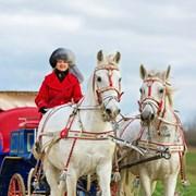 Катание в экипаже, запряженном парой белых лошадей фото