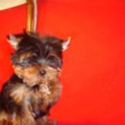 Щенки собак фото
