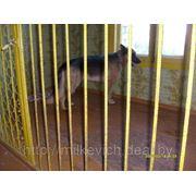 Гостиница ( передержка) крупных пород собак фото
