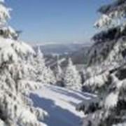 Зимний отдых. Апартаменты в Австрии на Новый год ирождество!!! Спешите!