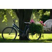 Доставка растений купить цена Днепропетровск Украина фото