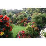 Доставка декоративных растений на заказ. Поставка декоративных растений для сада. фото