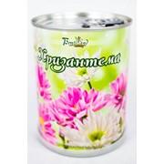 Хризантема Bontiland растение в банке, (410510) фото