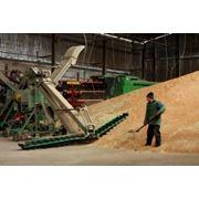 Заготовка сушка хранение семенного зерна. фото