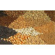 Заготовка сушка хранение семенного зерна фото