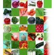 Продажа семян Интерфлора Украина фото