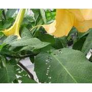 Продажа препаратов для защиты растений Доставка товаров для сада Киев фото