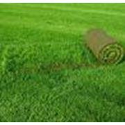 Продажа рулонного газона фото