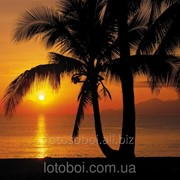 "Фотообои ""Palmy Beach Sunrise"" 254х368 8-255 2000000405469 фото"