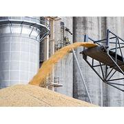 Согласование с железной дорогой заявки на перевозку зерна в вагонах-зерновозах по Украине странам СНГ и Европе фото