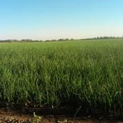 Ферма КФХ (земля 165ГА + постройки) фото