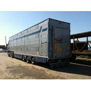 Перевозка крупного рогатого скот фото