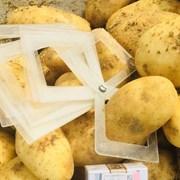 Картофель со склада от прямого импортера  фото