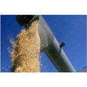 Перевозка зерновых культур фото