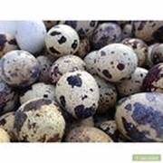 Яйцо перепелиное диетическое фото