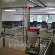 Клетки для поросят-отъемышей,кормушка Tube-o-mat. фото