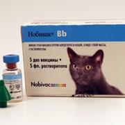 Живая сухая вакцина Нобивак Bb фото