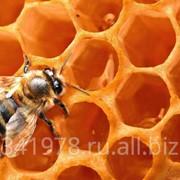 Мёд степной фото