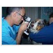 Диагностические исследования ветеринарные: кардиология неврология стоматология фото