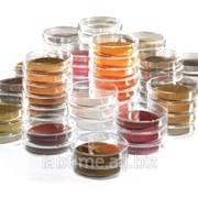 Стандарты фармакопейные Рабепразол сопутствующая примесь B, 15 мг 1598031 фото