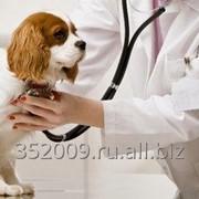 Первичный клинический осмотр ветеринара фото
