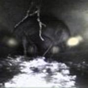 Телеинспекция сетей водоотведения фото
