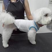 Стрижка собак гигиеническая фотография