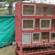 Клетки для кроликов, Дуб, Белолистка, Осина, Ольха, Уклон назад. фото