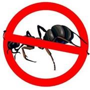 Выведение муравьев фото