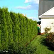 Фигурная стрижка деревьев, топиар фото