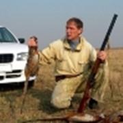 Охота на фазанов фото