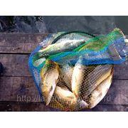 лазаревское отдых рыбалка