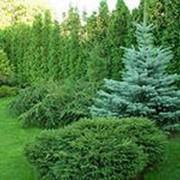 Биогумус органический 36 л удобрение Агроприрост для хвойных и декоративных