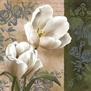 Постер Conrad Knutsen, Tulip фото