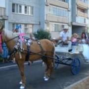 Прокат лошадей в Москве фото
