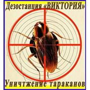 Уничтожение тараканов, дезинфекция, дезинсекция, дератизация в Алматы, услуги по дезинсекции в Алматы фото