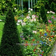 Устройство цветников и клумб №40 фото