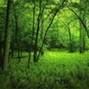 Услуги лесовосстановления и лесоохраны. Защита от пожаров и вредительства. фото