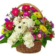 Доставка цветов и подарков фото