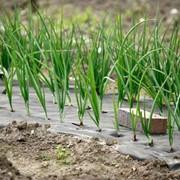 Агроволокно 23 г/м² для защиты растений фото