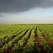 Охрана агропредприятий по Украине фото
